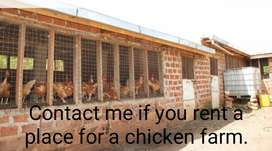 Contact me if you rent a place for a chicken farm.