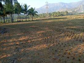 For sale agriculture land
