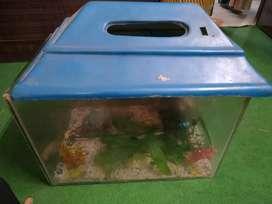 Fish aquarium with full set of 30 L in excellent condition