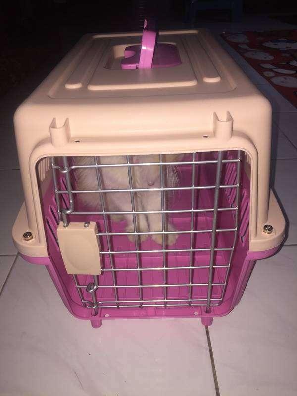 Pet cargo kucing/anjing/hamster/kelinci/burung 0