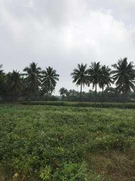 Agriculture land/agricultural land/agriland/coconut farm/farmland/land