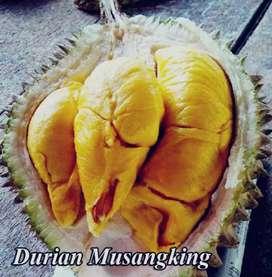 Bibit Durian Musangking Bisa Bayar Di Rumah