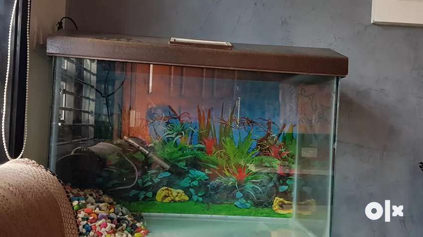 Aquarium glass 2.4 ft long 1.8 ft hight with airpump and heater 0
