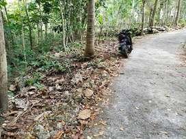 Kode : TP 2485 #Tanah Luas Murah di Dlingo Bantul Yogyakarta