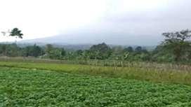Dijual Tanah Untuk Villa dan pertanian di Gunung Salak, Dramaga Bogor