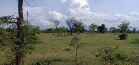 1 acre form  land Najangudu to T narsipura 29/-p/sq 012,63,240/-