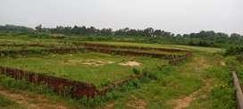 Pichri dream project
