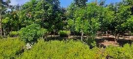 5 Gunta/Farming land For Sale @Sadasivpet