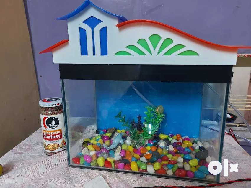 Want to sale Little fish aquarium with one year food. 0