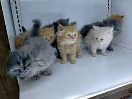 Punch and semi punch kittens