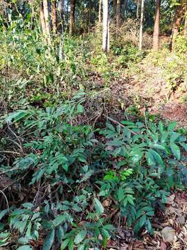 380 mtrs Plot for sale in Varca  Margao