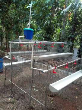 Hen Cage for 50 hens