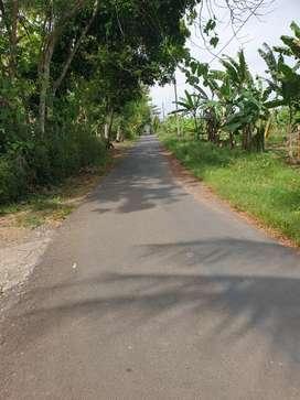 Tanah pekarangan 35jt lokasi desa dewi kecamatan bayan,