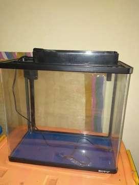 Aquarium ikan Boyu