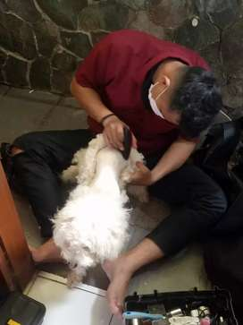 Salon Hewan ke rumah jasa grooming panggilan cukur dan mandi termurah