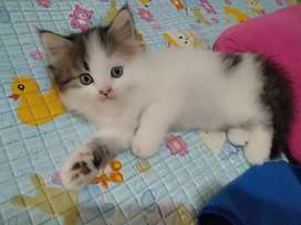 Open booking adopsi kucing