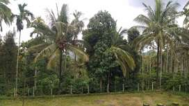 10 acre resort  /agriculture  land