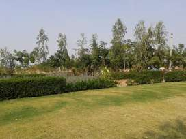 900 sft plot sale in just Rs 275*/- persft at bagodara
