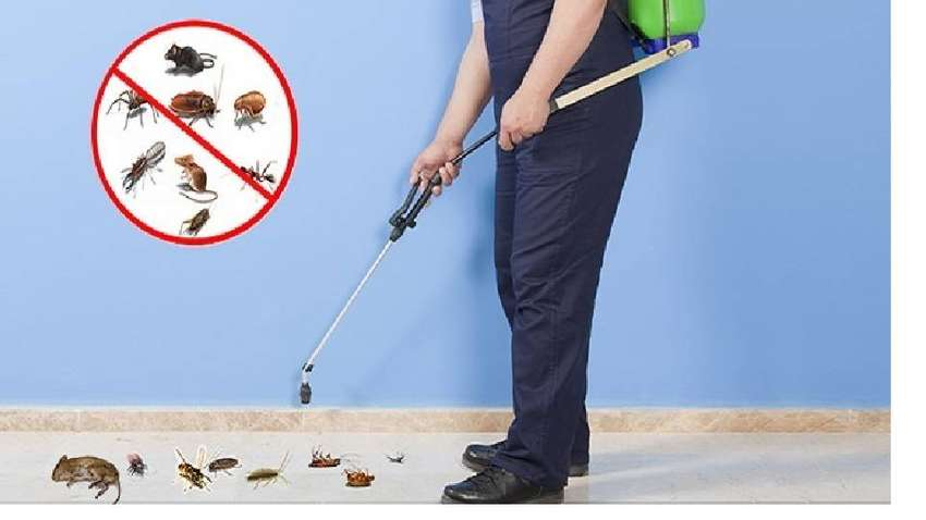 pest control termite bedbugs cockroach fumigation, water tank cleaning 0