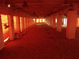 Poultry farm for rent