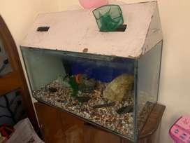 Fish aquarium for sale at mud price