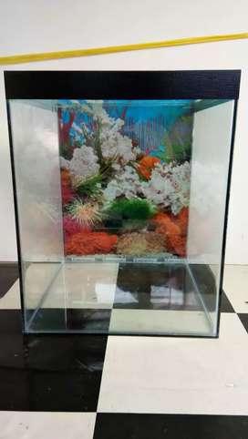 Aquarium baru ukuran 40x40x50