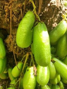 Bilimbi 1kg Rs.40, Cholesterol reducer, no chemicals,home tree,pulinji