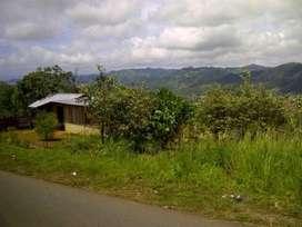 Tanah Jayapura Waena