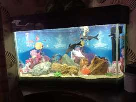 Triangular fish aquarium