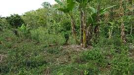 Tanah perkebunan