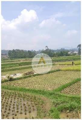 Jual Cepat Tanah Sawah di Ciwidey Bandung
