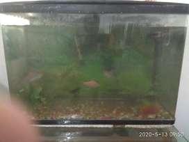 Big Fish Tank with 5 big fish