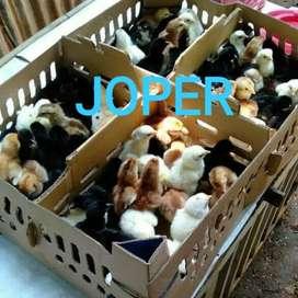 DOC JOPER(JOWO SUPER)