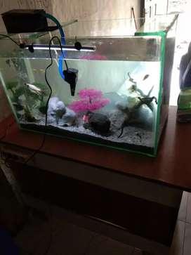 Aquarium Ikan Untuk Hiasan Rumah