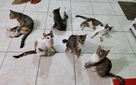 Adopsi kucing gratis