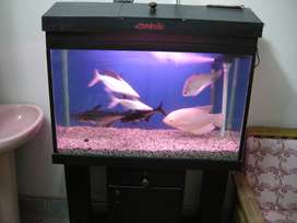 aqurium for (sale) in bahtreen condition with fishes