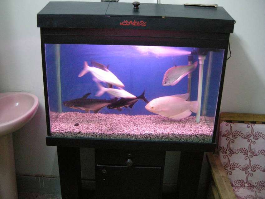 aqurium for (sale) in bahtreen condition with fishes 0