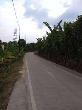 Jual Cepat Tanah kebun 5200m di Cugenang Cianjur (jl Raya Rancagoong)