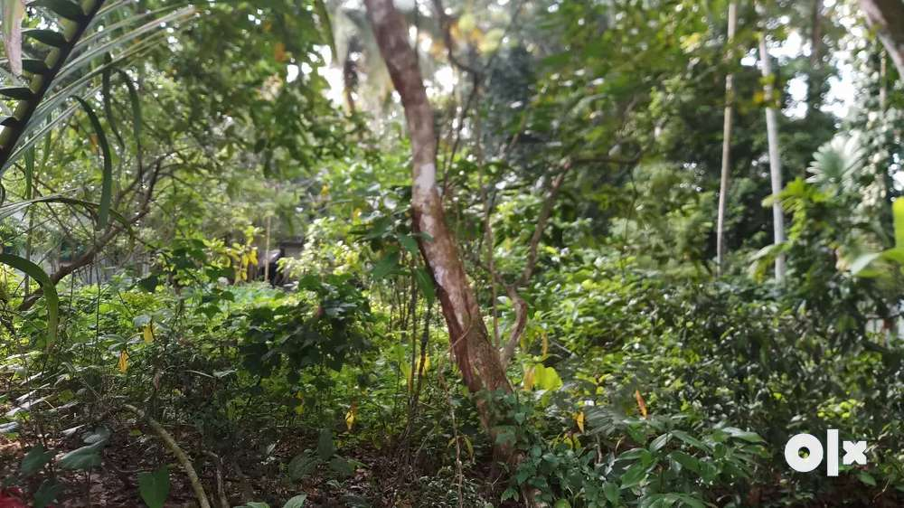 12 cent plot for sale. in thuravoor valamangalam south
