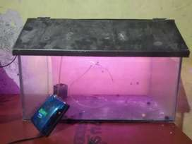Fish tank with oxygen