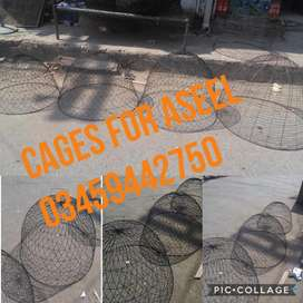 Cages Available For Aseel