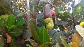Di jual tanah kebun Lombok Utara 15.731 m2