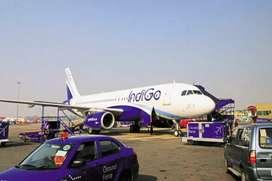 Urgent Hiring for Indigo Airport