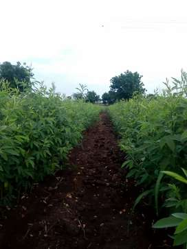 4acres agriculture land available for sale 17,00,000/acre