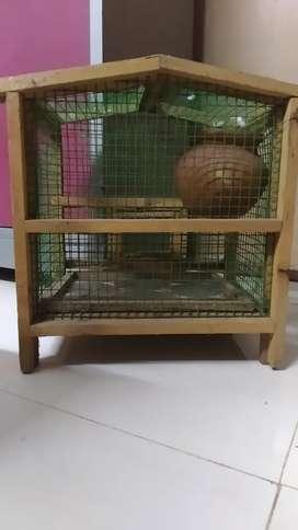 Birds cage