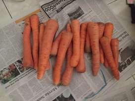 Sayuran kopeng segar