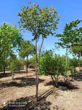 121Sqyds-One Gunta-Farming land for Sale @Sadasivpet
