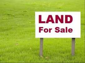 270sqmtr orchard plot for sale in anjuna BROKERS WELCOME