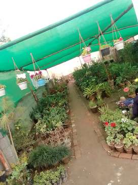 Plant nursery for cell