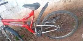 Mast cycle and dijan